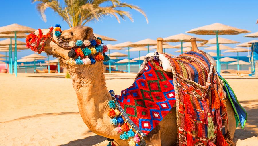 Braucam uz Ēģipti!