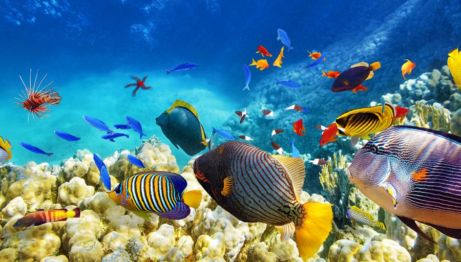 """Išskirtinis pasiūlymas nardymo gerbėjams – 7n. viešbutyje šalia koralinio rifo su """"super viskas įskaičiuota"""" maitinimu!"""