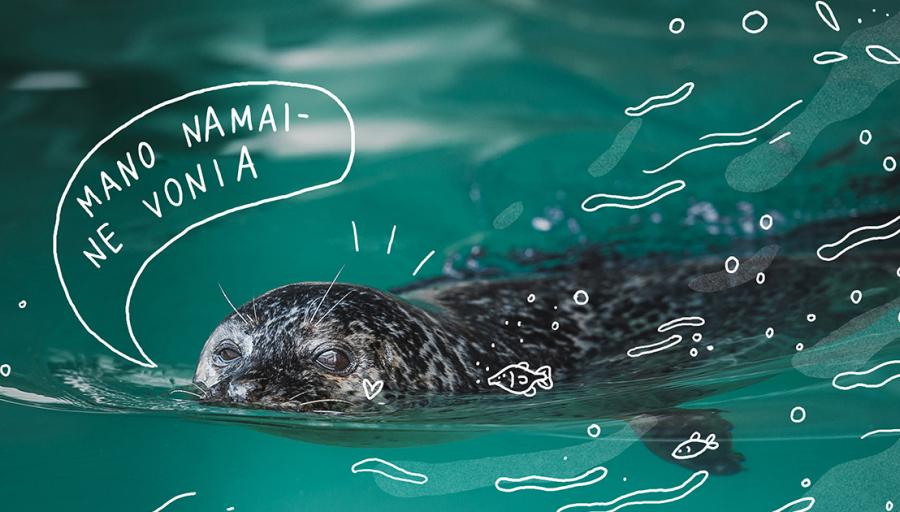 Kartu su Lietuvos jūrų muziejumi kviečiame prisidėti prie kilnios misijos – padėti Baltijos ruoniams grįžti į tikruosius savo namus – jūrą.
