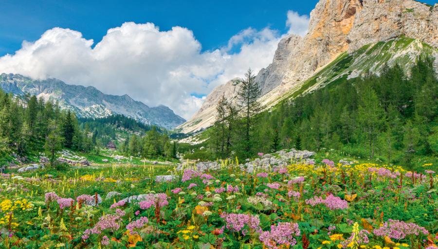 NAUJIENA –atostogos Slovėnijos Rivjeroje! Jau dabar vos už 50 €/asm rezervuokite kelionę – patraukliausi pasiūlymai čia!