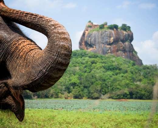 Šri Lanka. Liūto uola