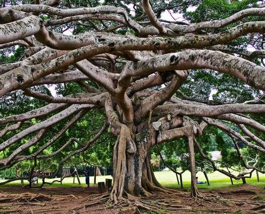 Šri Lanka. Peredanijos karališkasis botanikos sodas