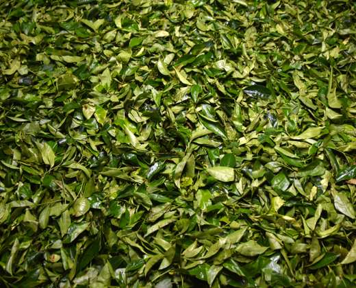 Šri Lanka. Ceilono arbatos fabrikas