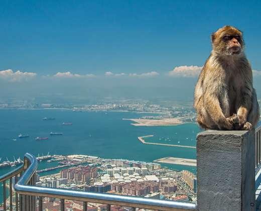 Europos kyšulio beuodegės beždžionės
