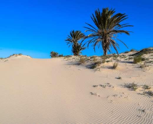 Tunisas. Gabesas